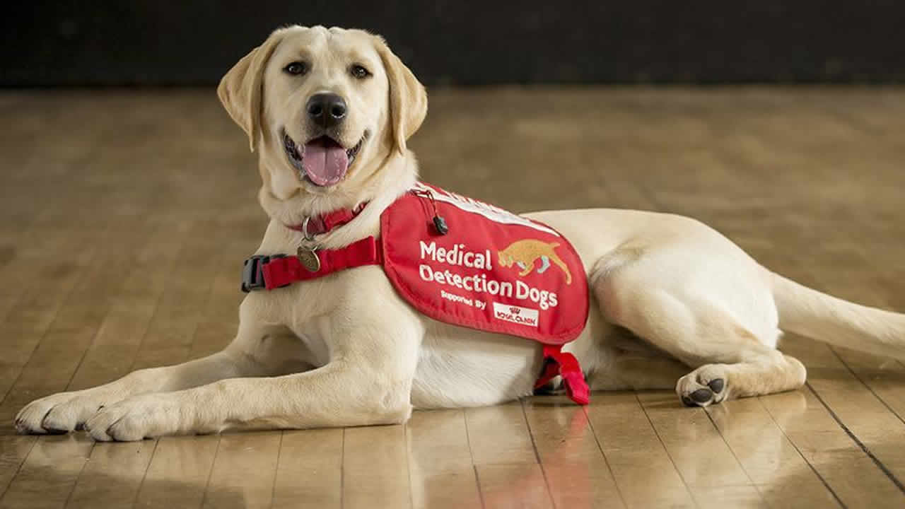 Dogs being trained to diagnose bug and could screen 750 people an hour