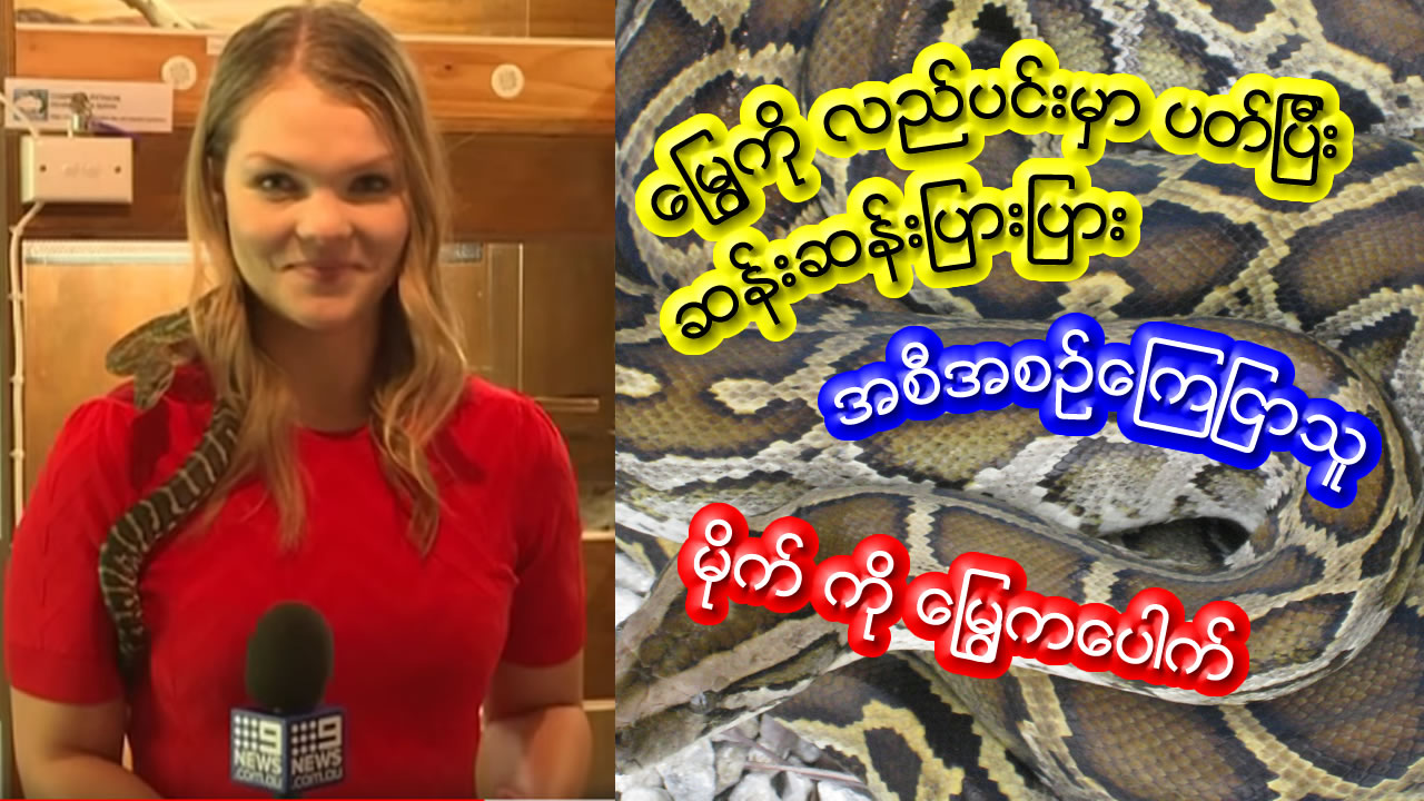 Australian reporter screams as snake strikes mic