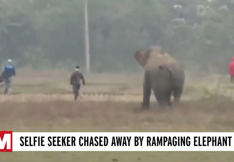 Moment elephant almost tramples tourists after they try to take a selfie with it