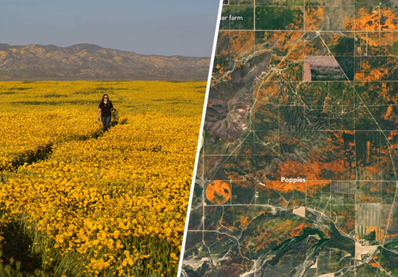 NASA Releases Incredible Satellite Images Of California Superbloom From Space