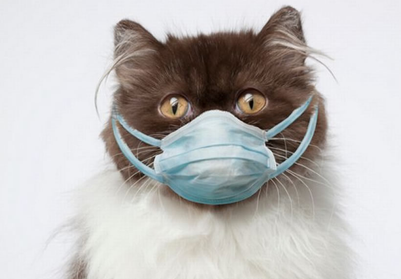 Cat quarantined in Russia after testing positive for coronavirus