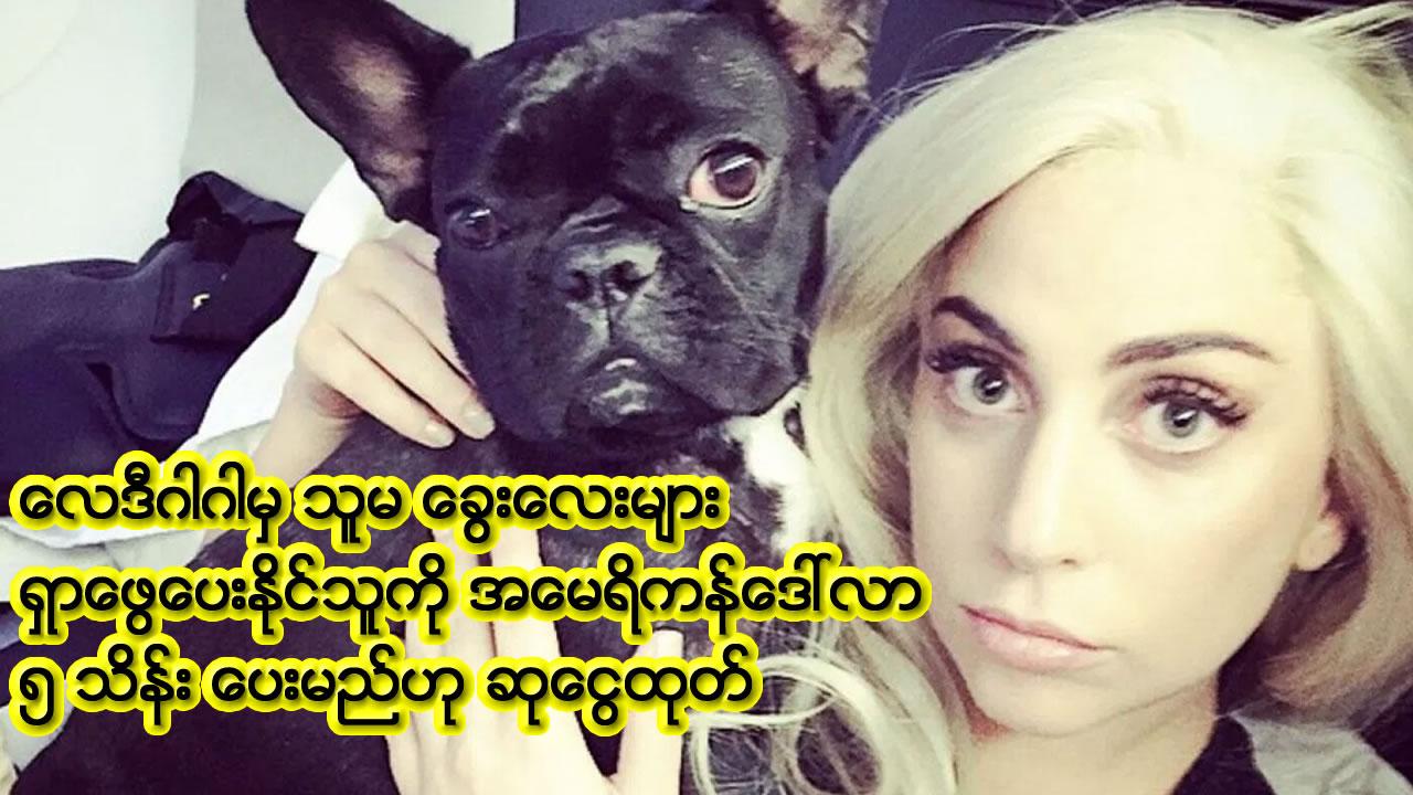 WORLDLady Gaga offers US $500,000 reward for stolen bulldogs