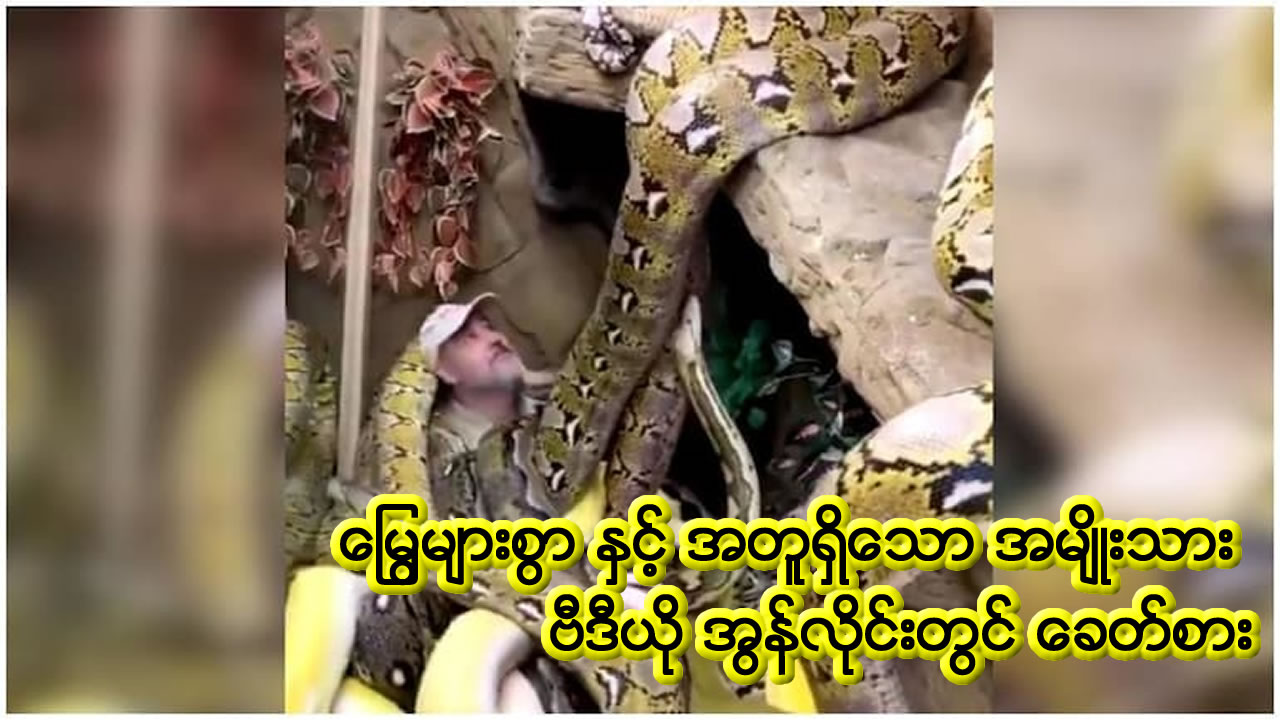 Man sits in area surrounded by several snakes. Blood-curdling video goes viral