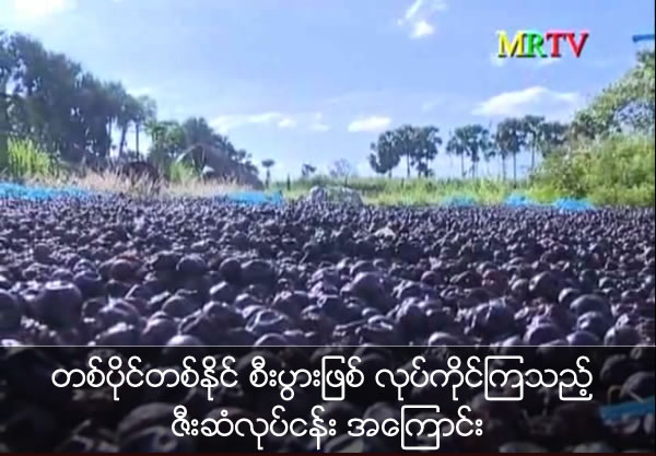 Knowledge for SME Plum seed business