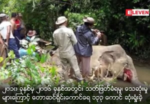 133 elephants lost within 2010 to 2016