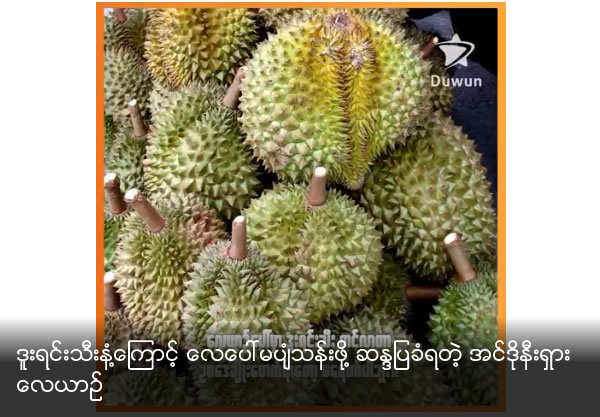 Indonesian passenger plane grounded after passengers complain about smell of durian fruit