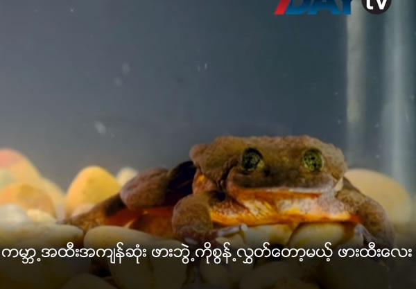 Romero, the 'World's Loneliest Frog', Finds a Mate, Could Save the Species