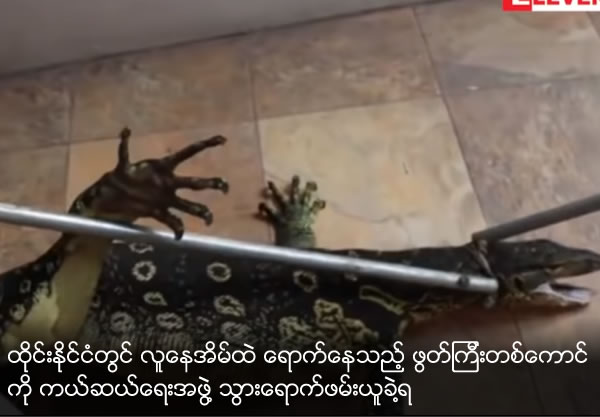 A lizard found in a house of Thai is taken care by rescue team