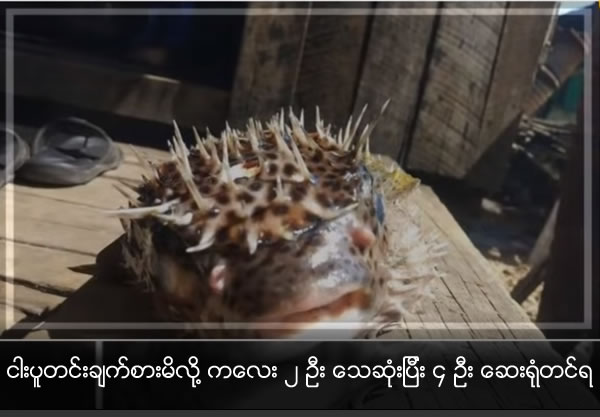 2 died and 4 hospitalized after eating  globe fish