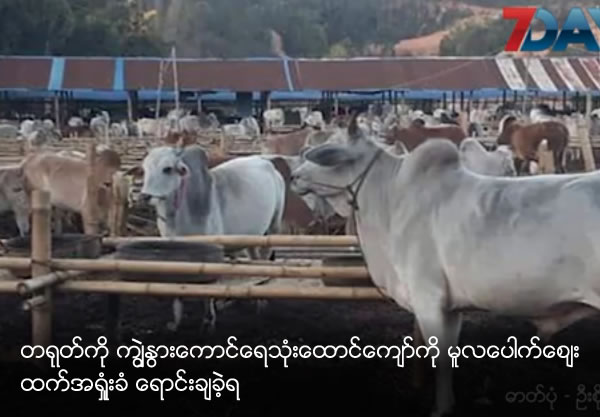 More than 3000 cows and bulls is sold with lower than market price
