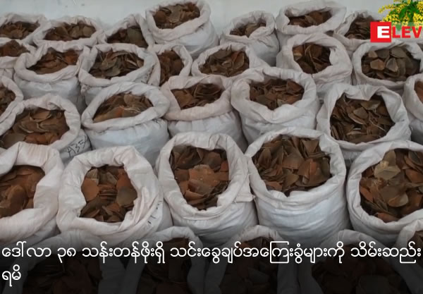 Seizes illegal pangolin scales worth $38.7 million
