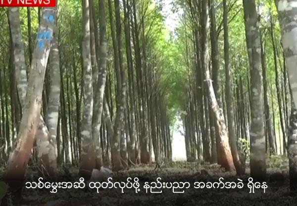 Need technology to produce Agarwood oil