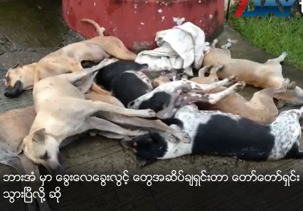 Control stray dog population in Pha-An by poisoning