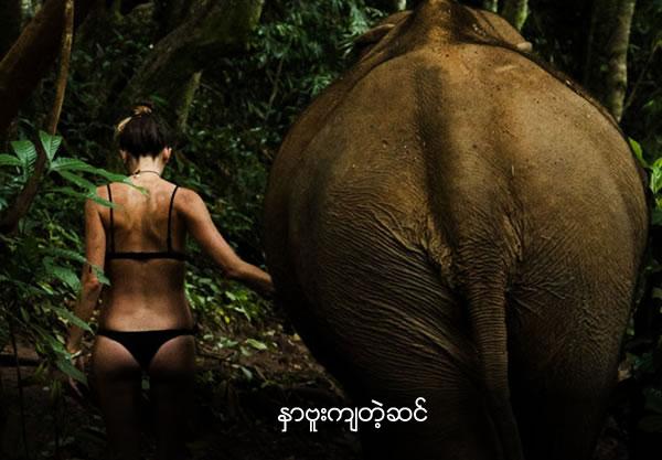 Playboy model in tiny bikini gets groped by elephant
