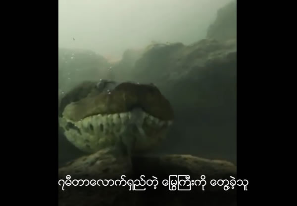 Diver Comes Face-To-Face With Giant Seven-Metre-Long Anaconda