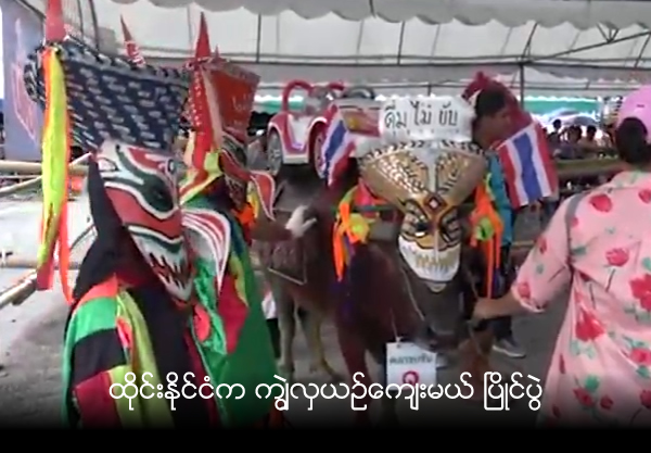 Buffalo 'beauty queens' take over pageant in Thailand