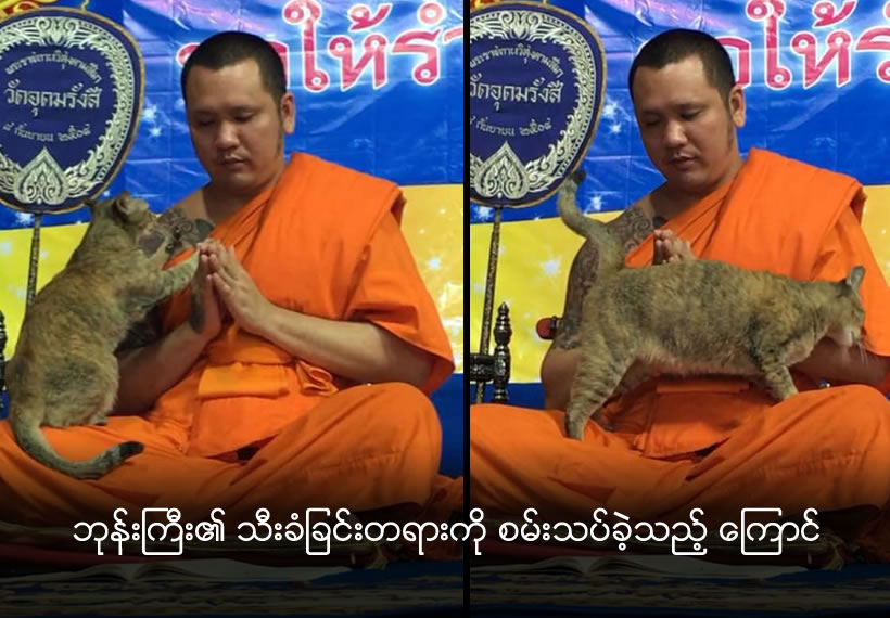Cat vs chants: Friendly feline tests Buddhist monk's patience