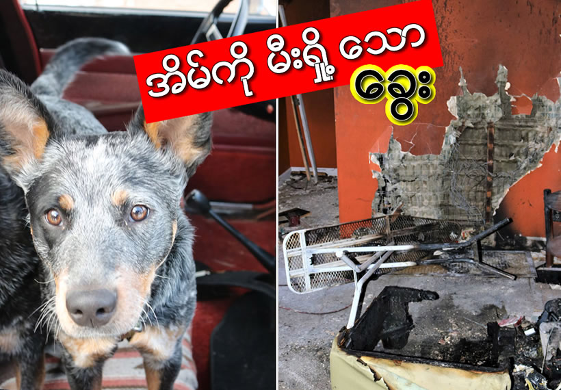 Safety warning after dog starts fire with iron