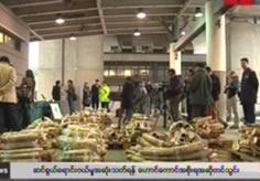 Hong Kong propose to stop Ivory Trade