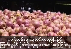 Onion planters are faced with difficulties because of onion price fall down