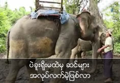 Elephants from Bago mountain range are become jobless