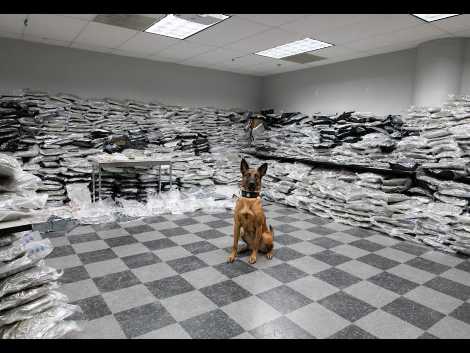 Police Dog Sniffs Out $10 Million Worth of Marijuana in Chicago