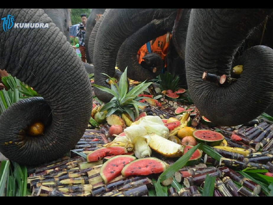 Treat buffet to elephant for World Elephant Day at Winkabaw Camp