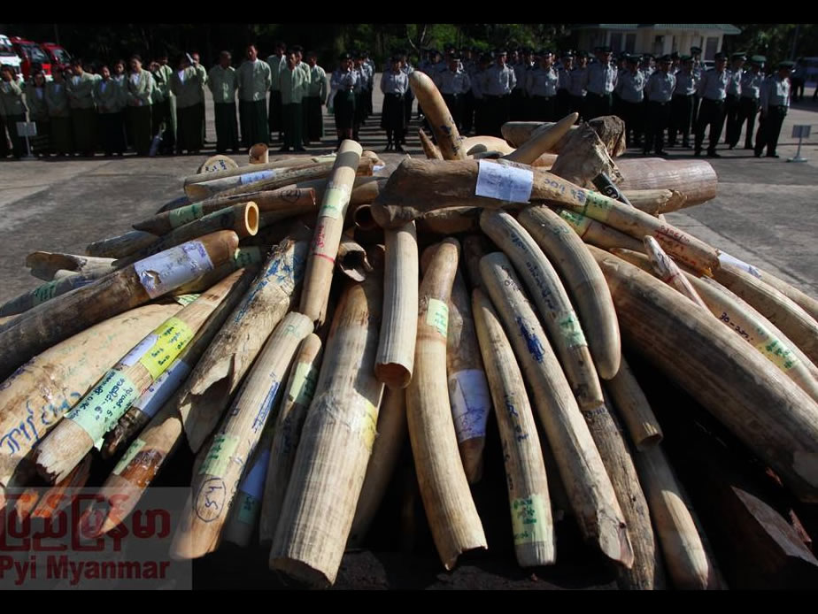 Illegal wildlife product worth 1.3 million US dollar had been destroyed