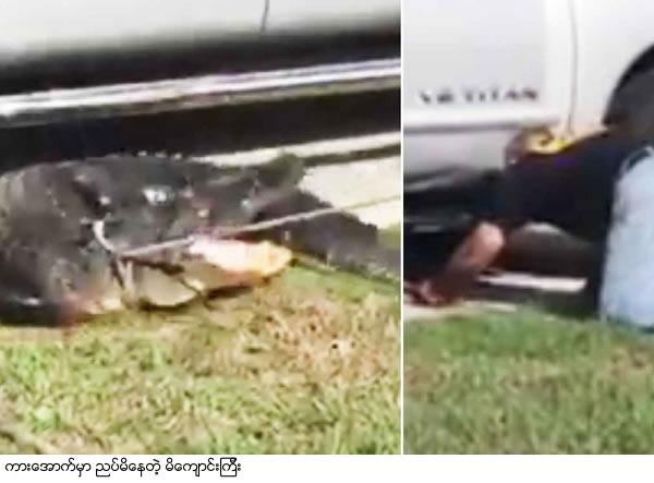 Florida Resident Finds Gator Hiding Under Pickup Truck